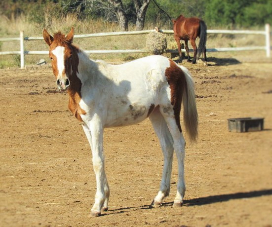 Harties Horse Trail Safaris