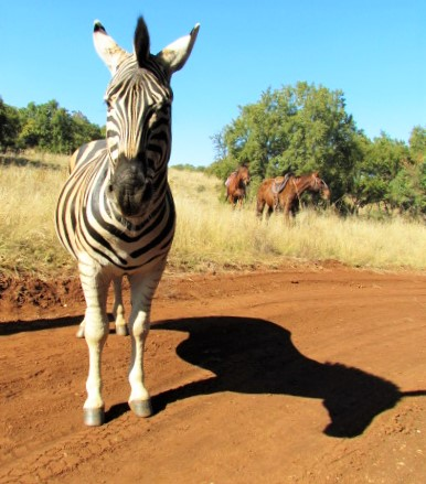 Harties Horse Trail Safari
